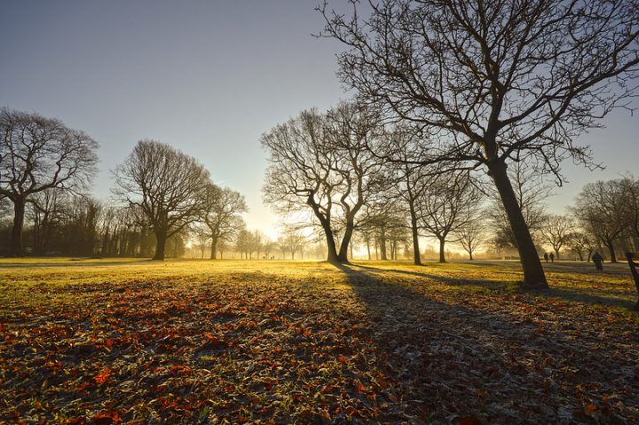 Worden Park on a frosty morning Pic: Tim Watts
