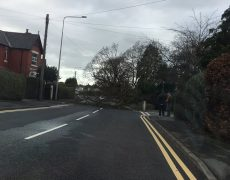 The fallen tree at the junction with Janice Drive Pic: Jennywhitwhot