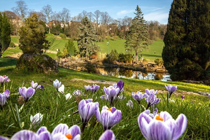 Spring flowers are out and about in Avenham Park Pic: Cat Race