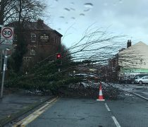 Fallen tree in Brook Street Pic: Natalie Close