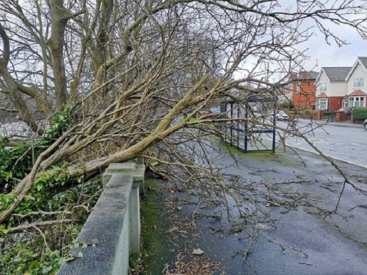 A fallen tree in Broadgate Pic: Chris Hough