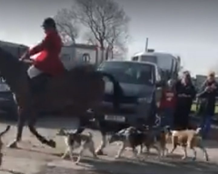A rider is seen with a pack of dogs in the video