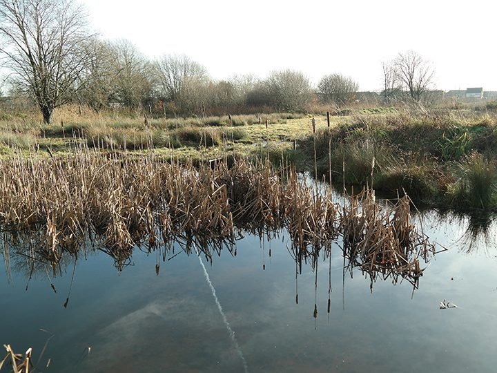 Dob Croft is a five-acre nature reserve on The Intact Centre's doorstep