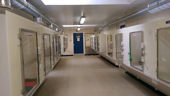 Inside the cattery at the RSPCA in Preston Pic: Blog Preston
