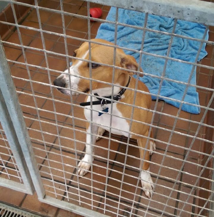 Joey, a lurcher, is one of the dogs at the RSPCA kennels Pic: Blog Preston
