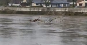A tree floats down the Ribble after Storm Gareth Pic: charl_bb