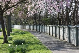 Broadgate in the Springtime Pic: Middle Ford Miss