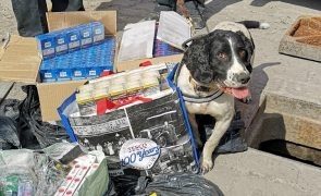 One of the sniffer dogs with their haul Pic: Lancashire Trading Standards