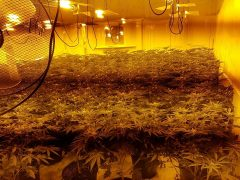 Inside the cannabis factory Pic: Preston Police