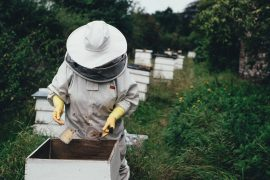 A bee keeper attends a hive Pic: Pexels/9154