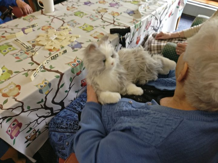 Phyllis the robotic cat is improving the lives of people