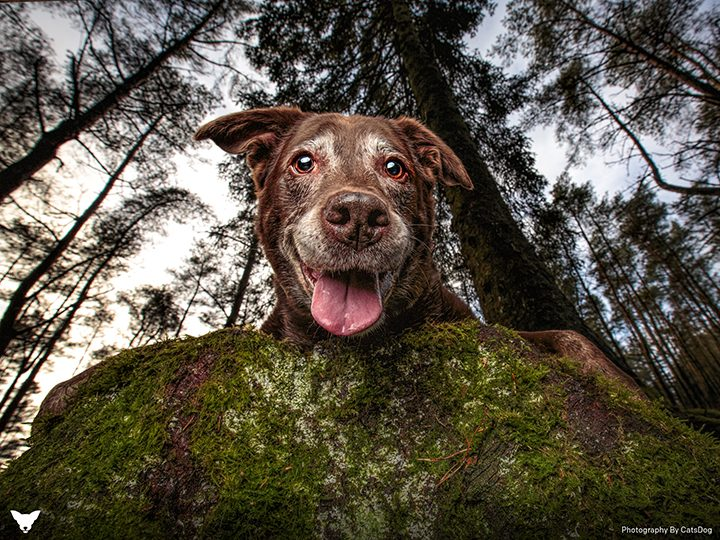 Cat's photo of Bailee placed second in the Oldies category in the Kennel Club Dog Photographer of the Year Pic: CatsDog