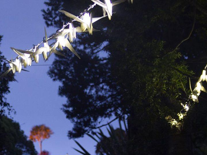 Luminous Birds Pic: Kathy Hinde