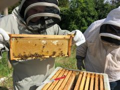 UCLan staff working the beehives currently kept at the Westleigh Conference Centre