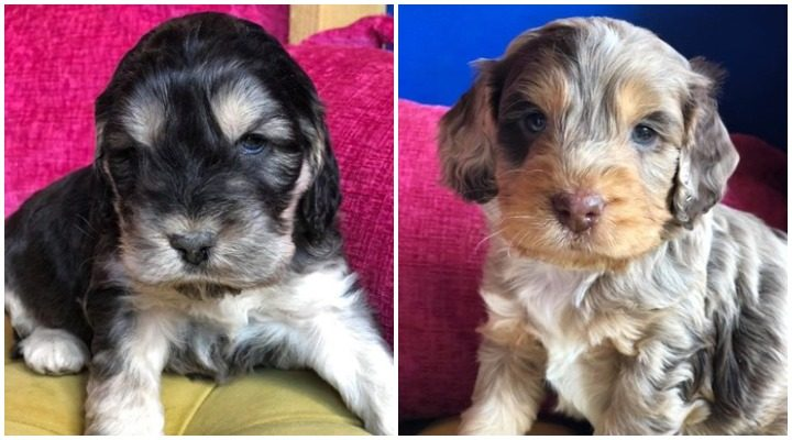 Two of the puppies taken during the raid on the farm Pic: Lancashire Police