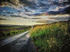 Into the Sunset by Sandra Wiseman
