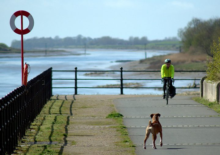 Dog and cyclist on the Guild Wheel Pic Tony Worrall