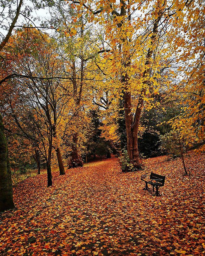 Hurst Grange Park Pic: Janette Hall