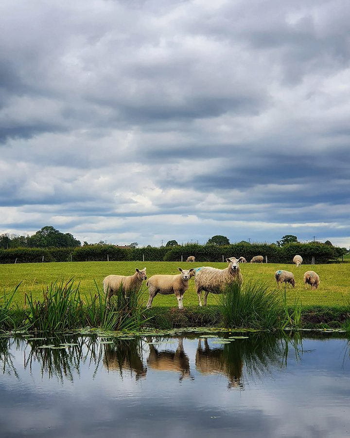 Lancaster Canal near Cottam Pic: Caroline Hammond