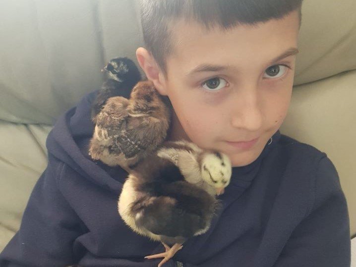 Danny's son with the chicks when they were just a few days old.