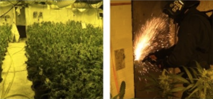 Cannabis found (left) and an officer cutting through the roller shutter