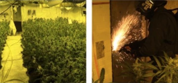 Cannabis found (left) and an officer cutting through the roller shutter