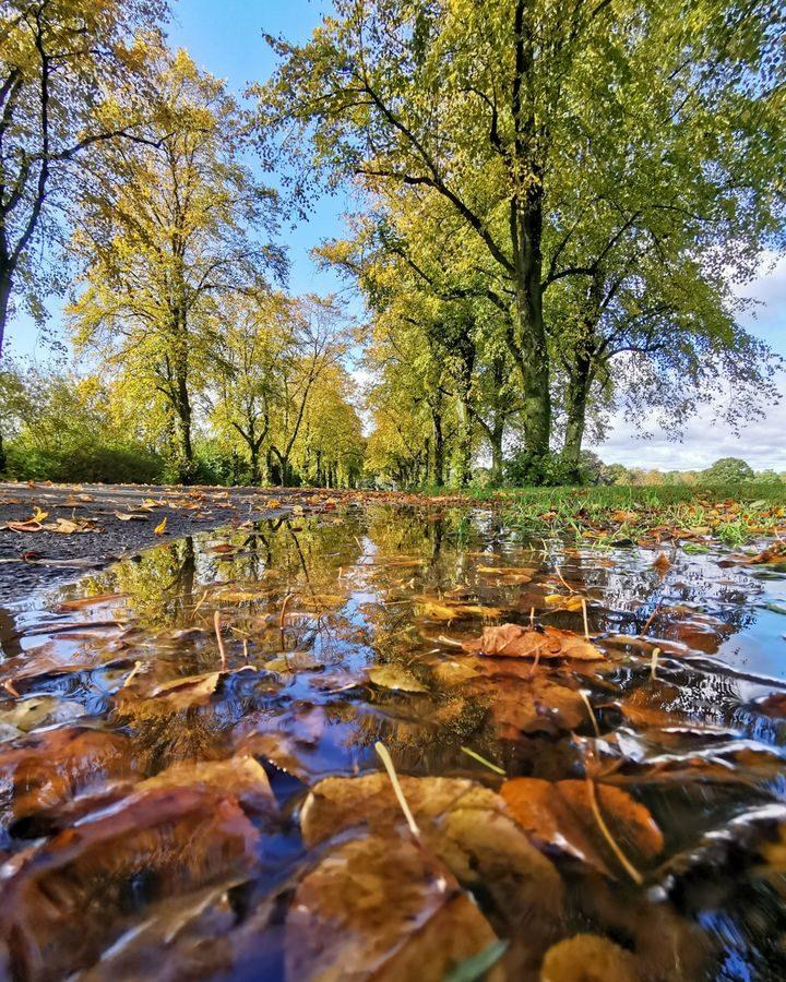 Haslam Park Pic: Chris Darley