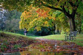 Moor Park Pic: Paul Melling
