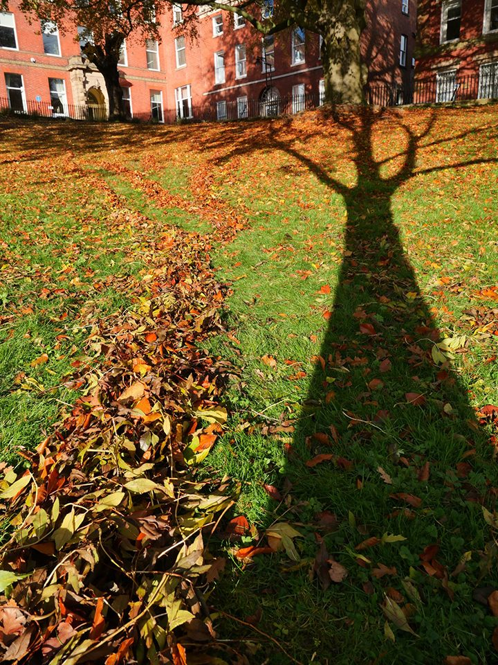 Evidencing the rotation of the earth by tracing shadows in leaves. Pic: Lisa Brown