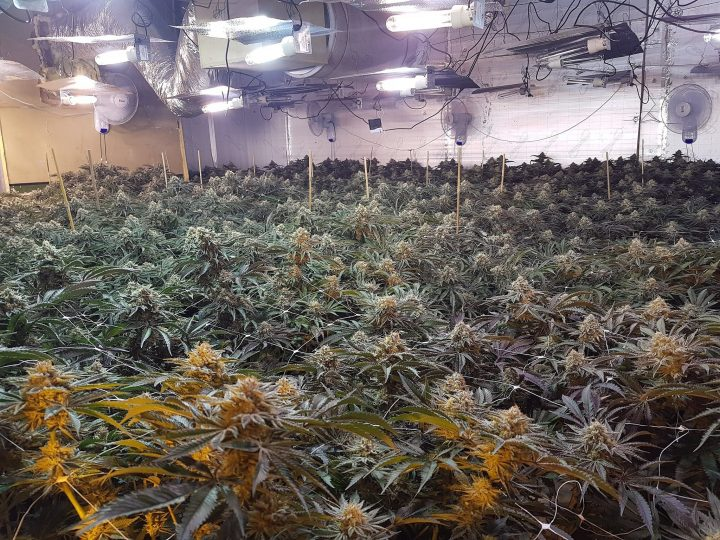 Cannabis farm located on Church Street. Pic: Preston police