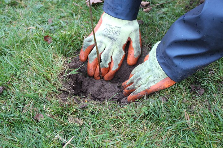Planting a tree Pic: Archbishop Temple School