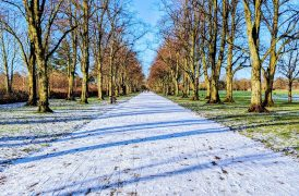 A wintry walkway in Haslam Park in the past week Pic: Tony Worrall