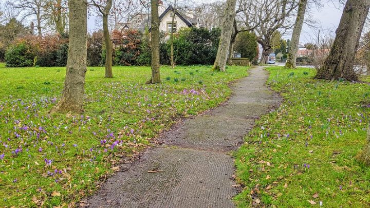 Signs of spring in Ashton Park taken on Wednesday 17 February Pic: Tony Worrall