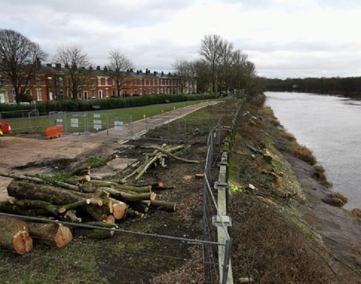 The trees being cut down along Broadgate Pic: Chris Hough