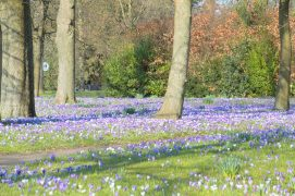 Signs of spring in Ashton Park on Monday 1 March Pic: Tony Worrall