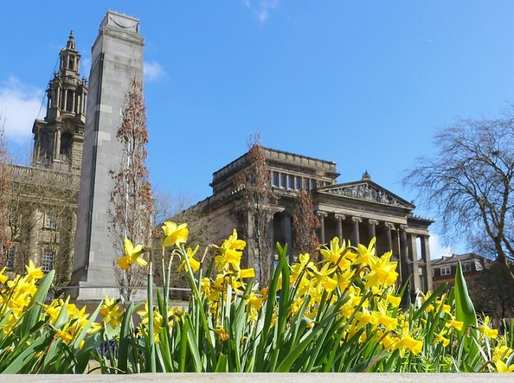 Daffodils in Preston city centre with the Harris and Cenotaph behind Pic: Tony Worrall
