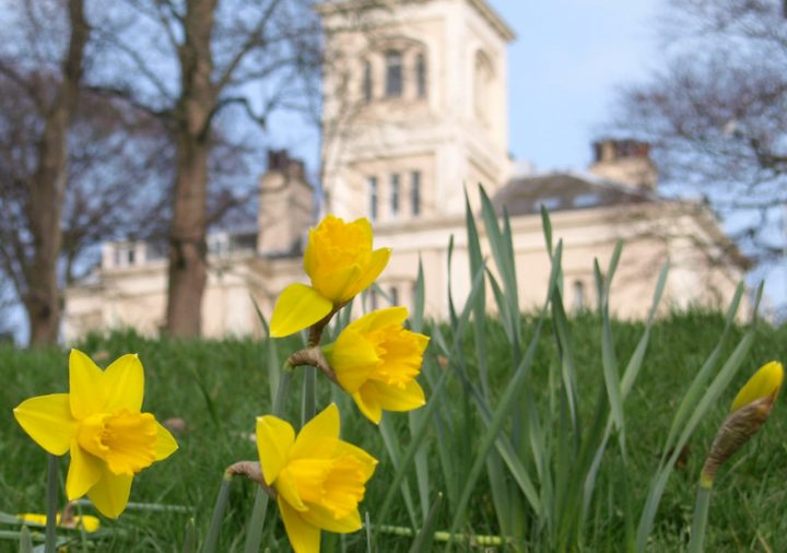 Signs of spring all across Preston, daffodils in Avenham Park Pic: Tony Worrall