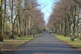 Tree lined walk at Haslam Park Pic: Tony Worrall