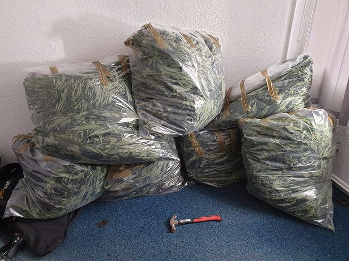 Leyland cannabis grow Pic: South Ribble Police