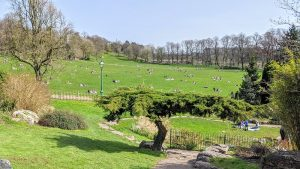 Sunshine in Avenham Park on some of the first days of restrictions easing Pic: Tony Worrall