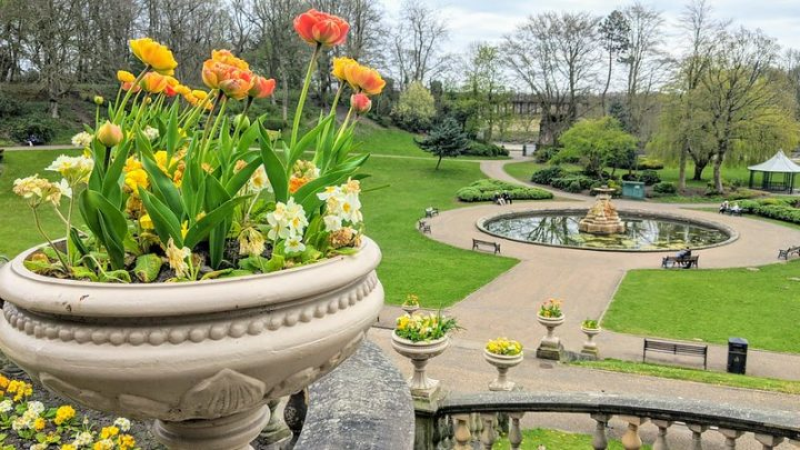 Spring flowers in Miller Park Pic: Tony Worrall