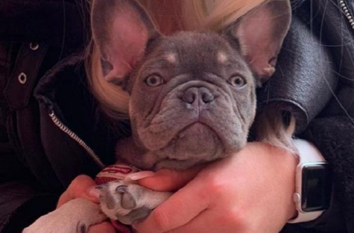 Nelly has gone missing from his home in Longridge