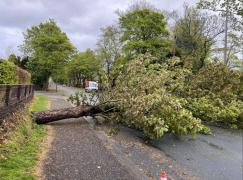 Fallen tree in Ashton, Egerton road. Pic: Dan Parry